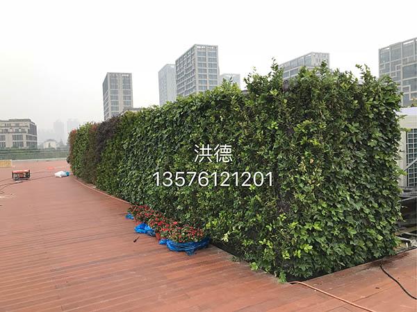 生态绿植墙
